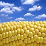 Maize Poster