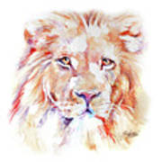 Majestic African Lion Poster