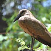 Majestic Bird Poster