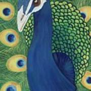 Majestic Peacock Poster
