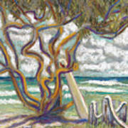 Malaekahana Tree Poster by Patti Bruce - Printscapes