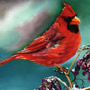 Male Cardinal And Snowy Cherries Poster