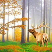 Male Elk Bugling Poster