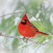 Male Northern Cardinal In Winter - 2 Poster