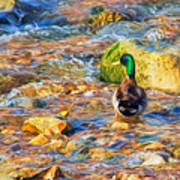 Mallard At The River - Impressions Poster