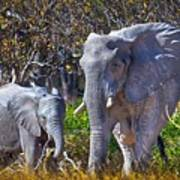 Mama And Baby Elephant Poster