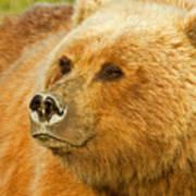 Mama Bear Close Up Poster