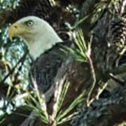 Mama Eagle  Poster