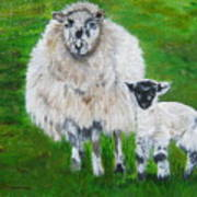 Mamma And Baby Sheep Of Ireland Poster