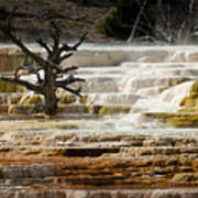 Mammoth Hot Springs Beauty Poster