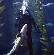 Man And Shark Poster