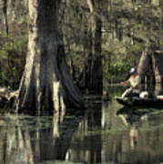 Man Fishing In Cypress Swamp Poster