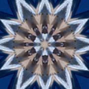 Mandala Sea Star Poster