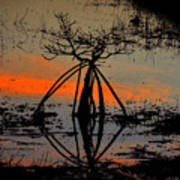 Mangrove Silhouette Poster