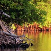 Mangroves Of Roatan Poster