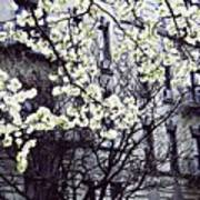 Manhattan Spring Poster