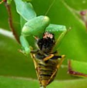 Mantis Munchies Poster