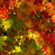 Maple Abstract Poster