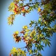 Maple Seeds In September Poster