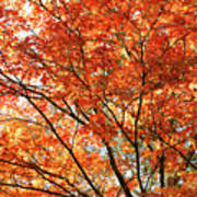 Maple Tree Foliage Poster