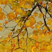 Maples In Autumn Poster by Carolyn Doe