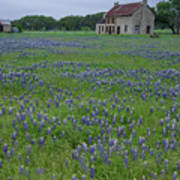 Marble Falls Texas Stone House And Bluebonnets Poster