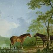 Mare And Stallion In A Landscape Poster