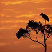 Maribou Stork On Tree With Orange Sunrise Sky Poster