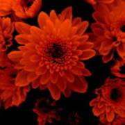 Marigolds In Orange Light Poster