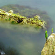 Marine Life On Exposed Concrete Debris Poster