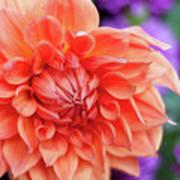 Market Flowers  Poster
