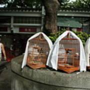 Market Vendor Selling Caged Birds Poster by Sami Sarkis
