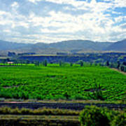 Marlborough Wine Country Poster