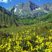 210403-v-maroon Bells And Sunflowers  Poster