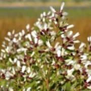 Marsh Blooms Poster