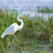 Marsh Egret Poster