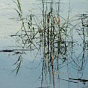Marsh Grass Poster