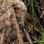 Marshy Nest Poster