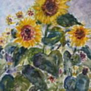Martha's Sunflowers Poster
