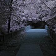 Matthiessen State Park Bridge False Color Infrared No 2 Poster