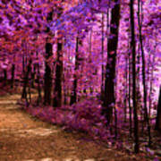Matthiessen State Park Trail False Color Infrared No 2 Poster