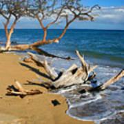 Maui Beach Dirftwood Fine Art Photography Print Poster