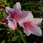 Maymont Flowers Poster