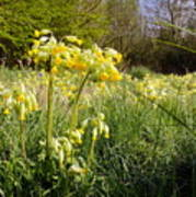 Meadow Cowslip Poster