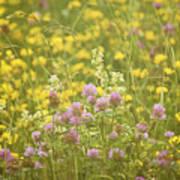 Meadow Dreams... Poster
