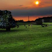 Meadow Field Poster