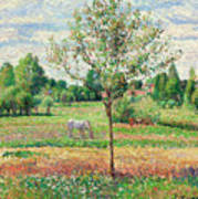 Meadow With Grey Horse, Eragny Poster