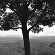 Meditation Tree  Poster
