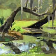 Meditative Swamp Poster