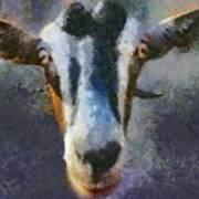 Mediterranean Goat Poster